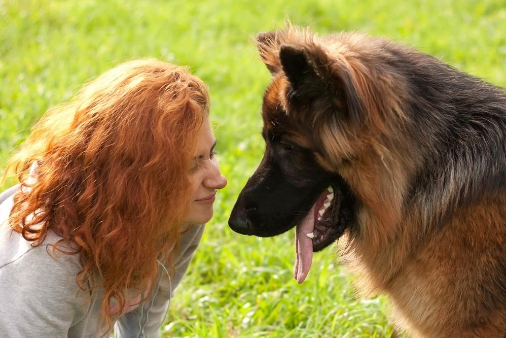 Kommunikation zwischen Hund und Mensch