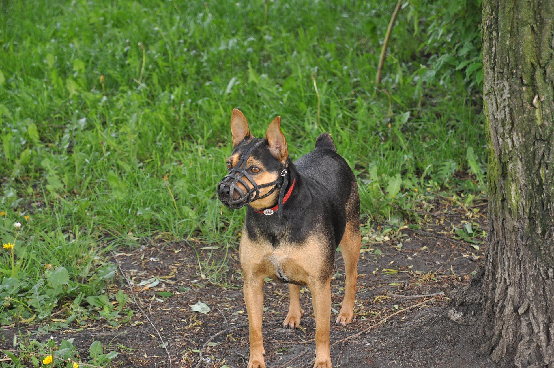 Der Maulkorb beim Hund