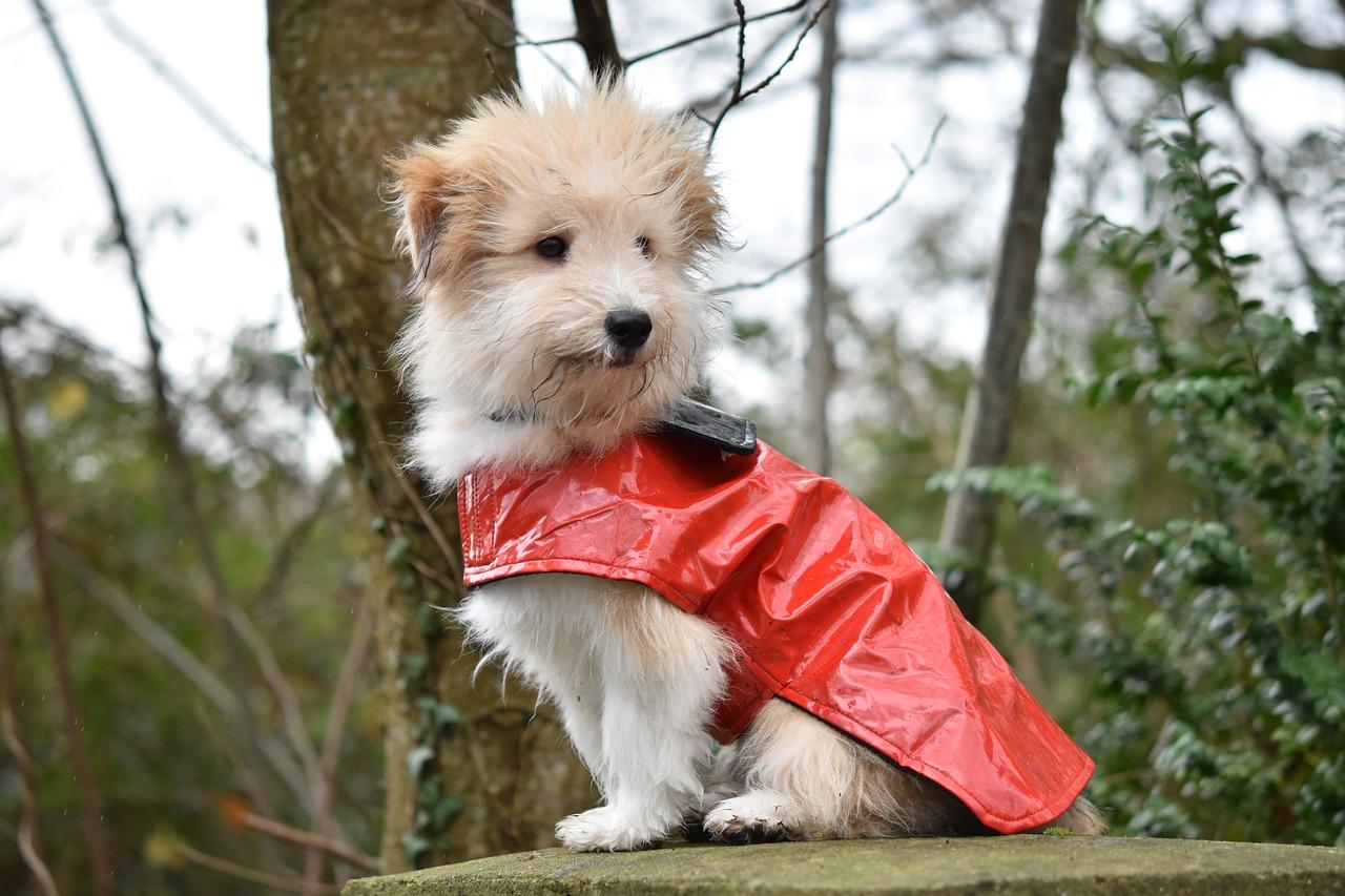 Kleidung für Hunde