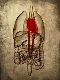 Organismus Osteopathie