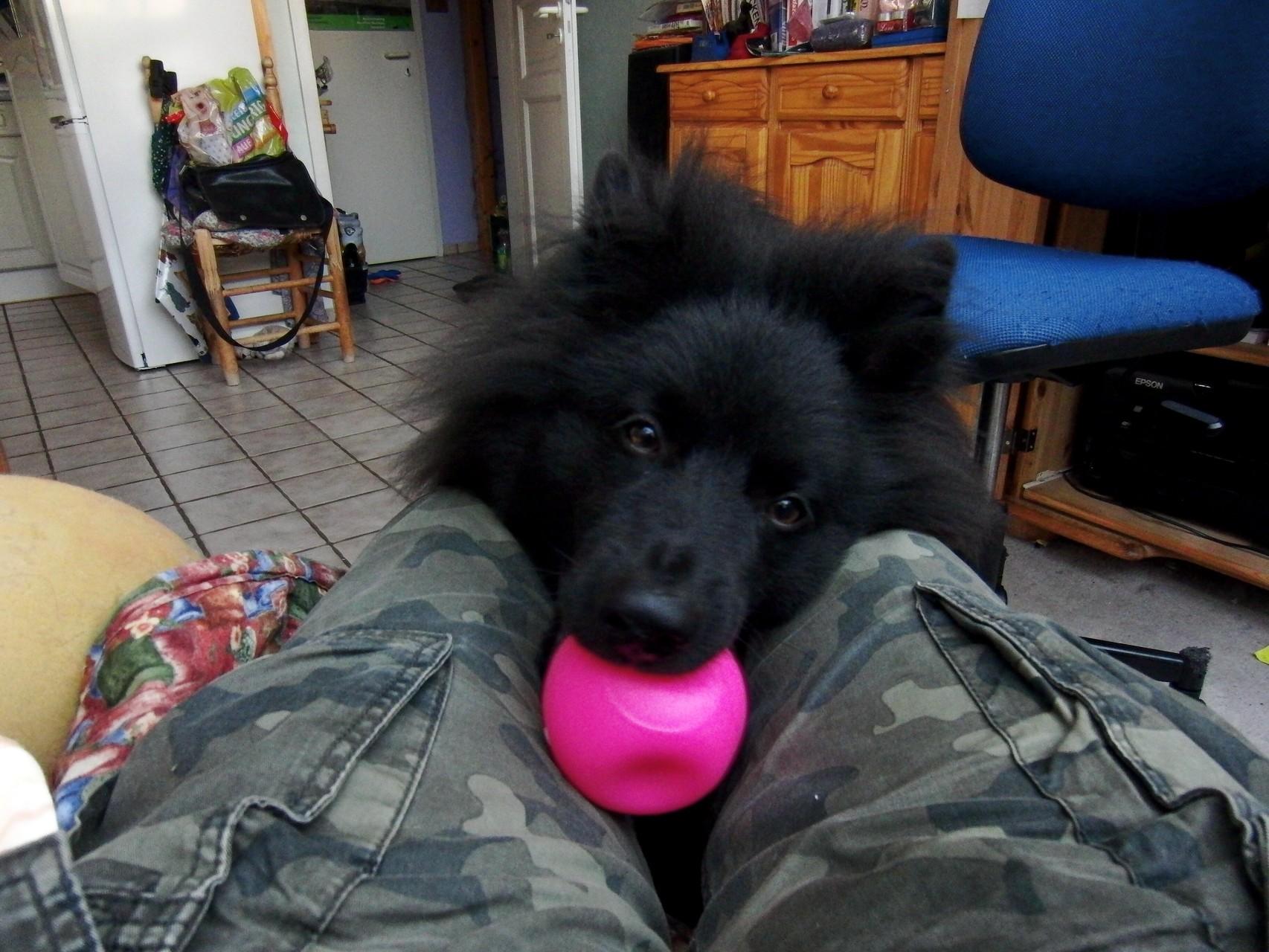 """Bitte, bitte ich """"Anoki"""" möchte mit dir spielen!"""