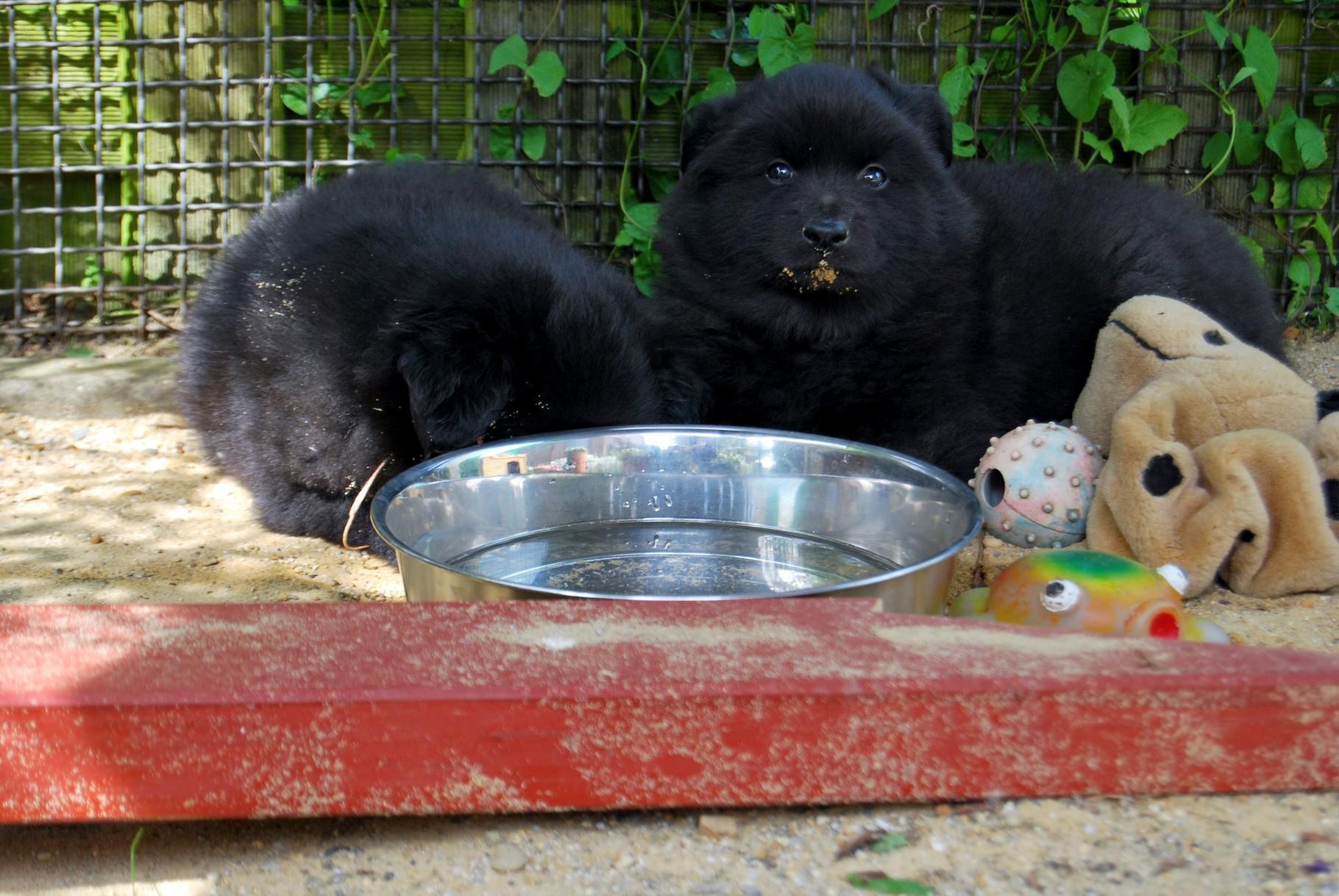 """Links ist Asko, rechts bin ich """"Anoki"""""""