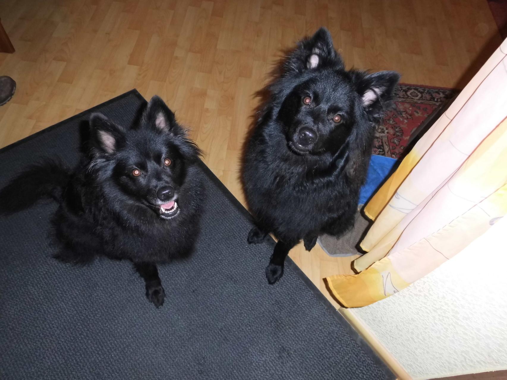 """Ich """"Minka"""" links, Akros Primus rechts: Bitte recht freundlich!"""