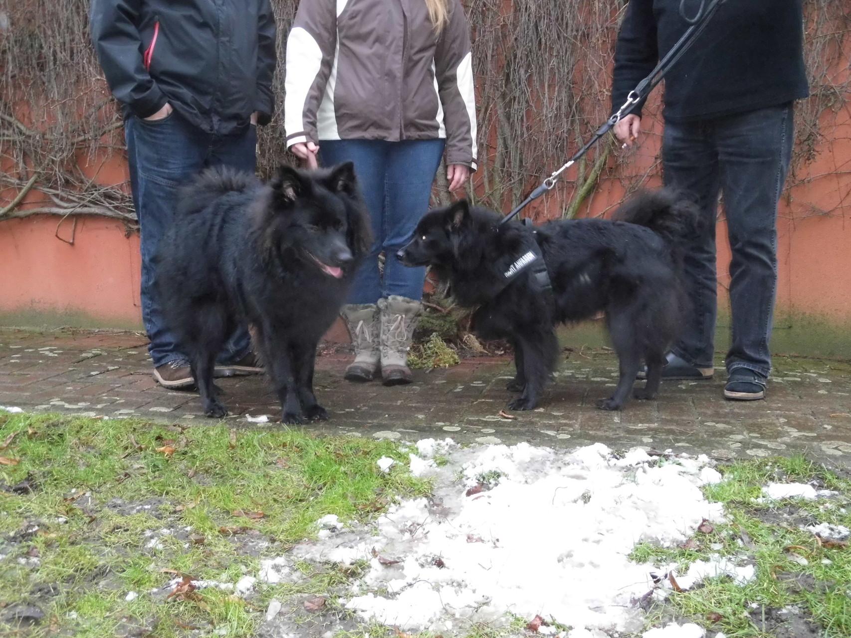 """Akros Primus links, ich """"Minka"""" rechts: Jetzt endlich drau?en, beim Üben für die Ausstellung!"""