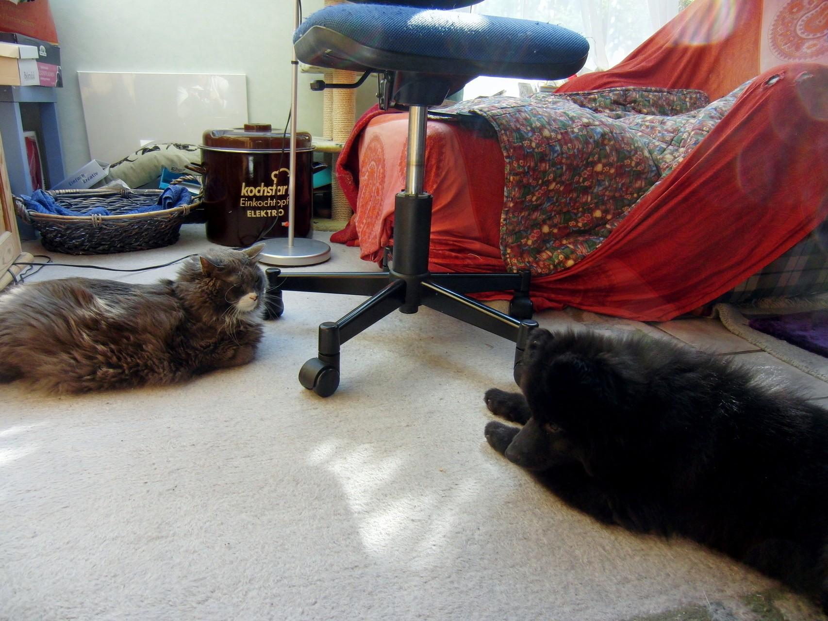 Nah, Katze wollen wir auch spielen?