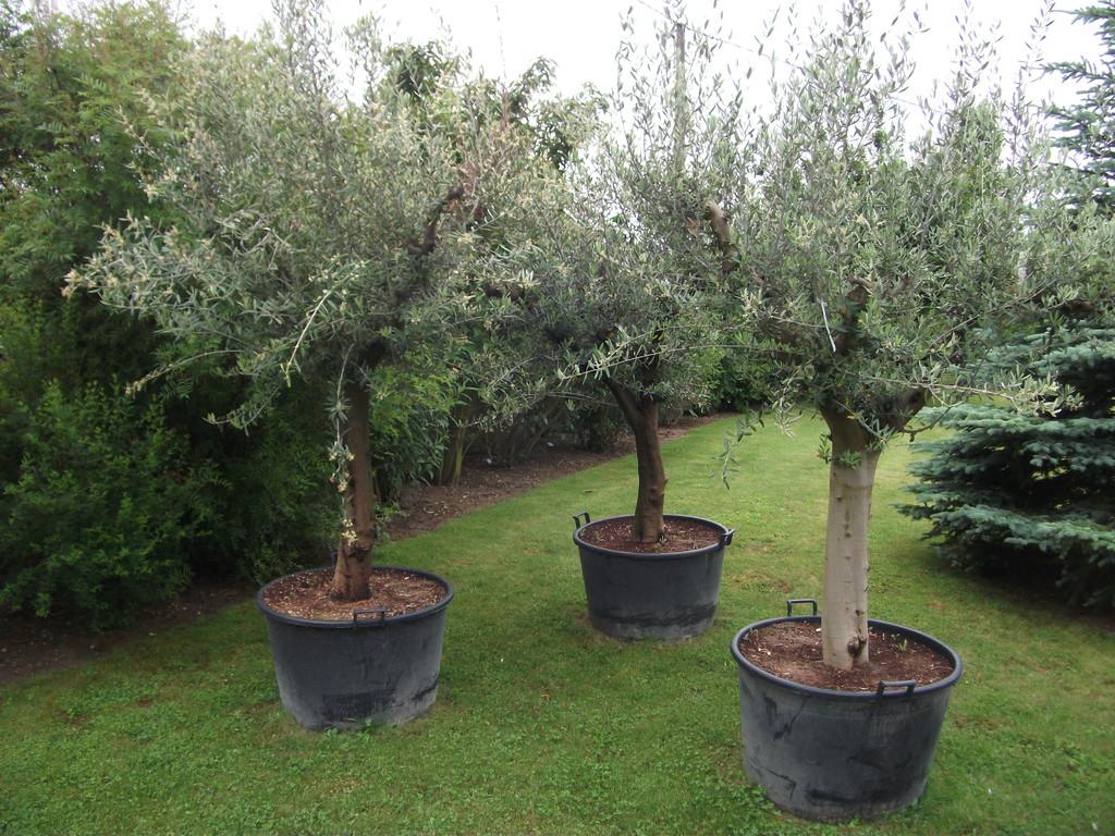 La pepiniere site le jardin des 4 saisons for Le jardin des 4 saisons pusignan