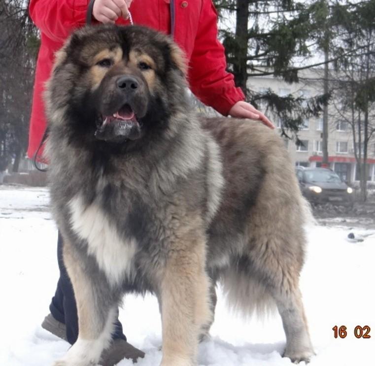 Каталог питомников и заводчиков собак Выберите и купите