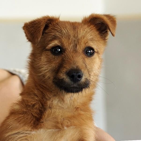 Pupi adopté par Margaux