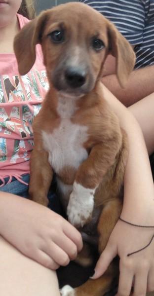 Coco adopté par Rafael