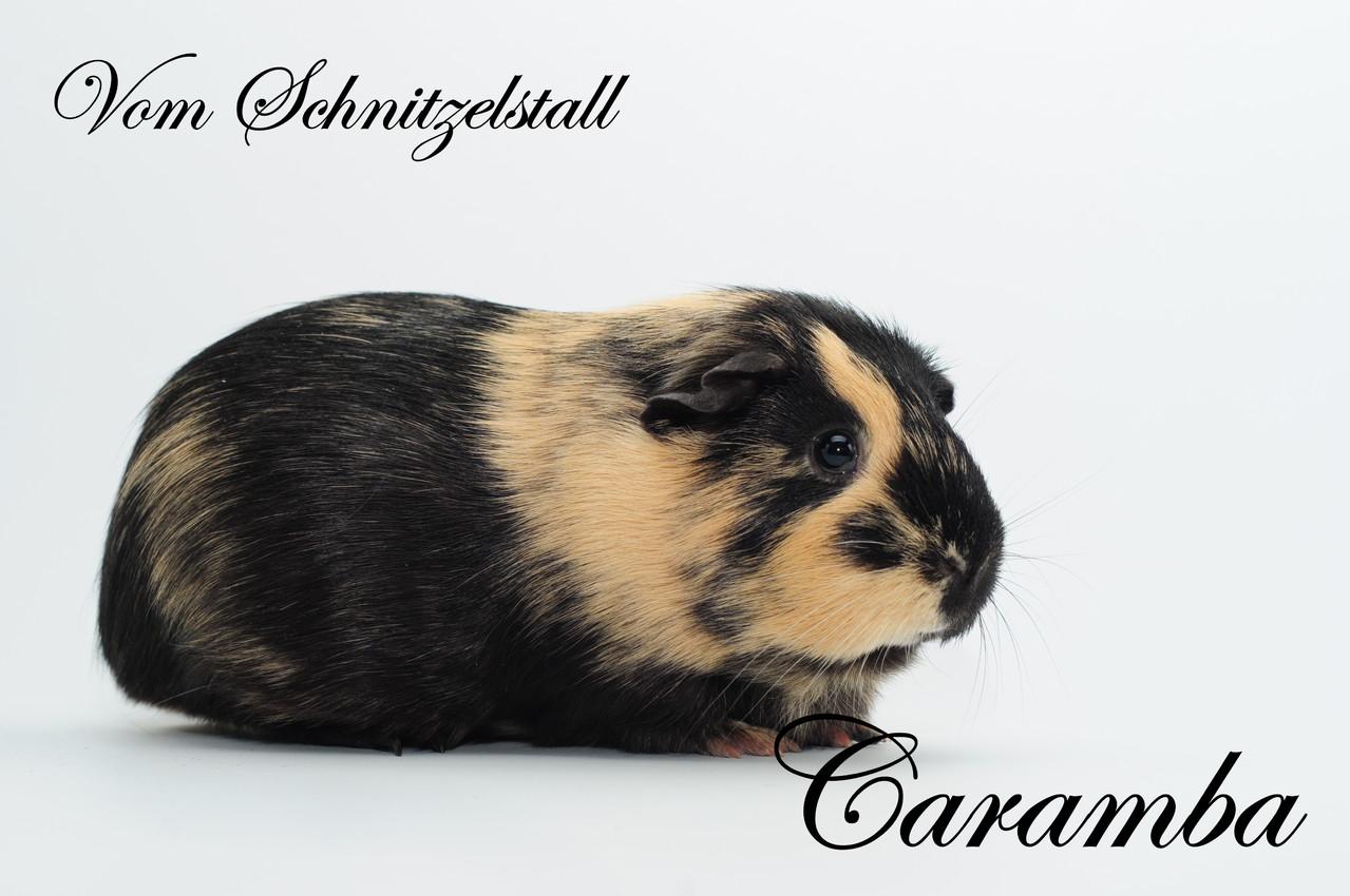 Caramba v. Schnitzelstall - Showtier