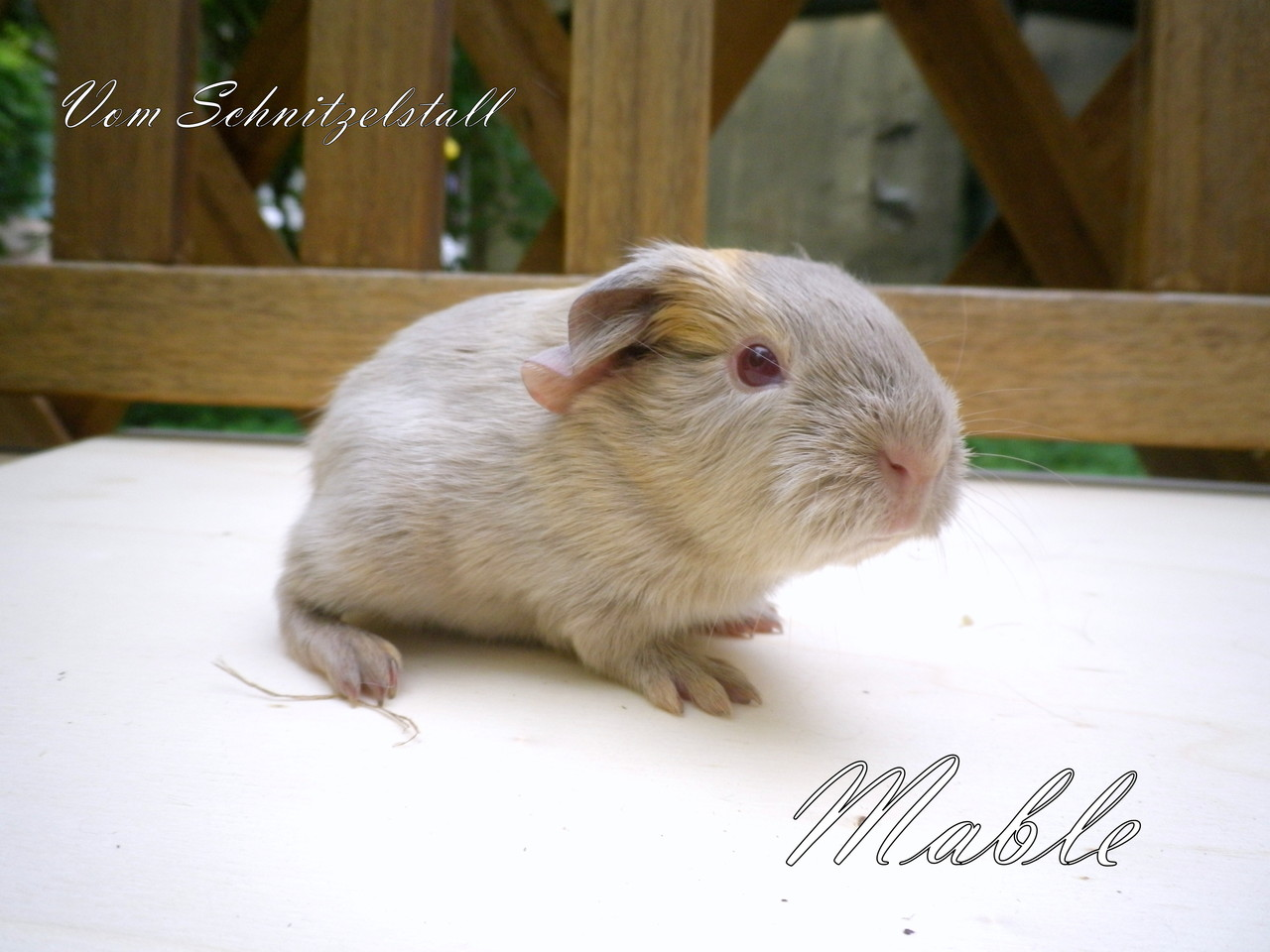 Mable vom Schnitzelstall