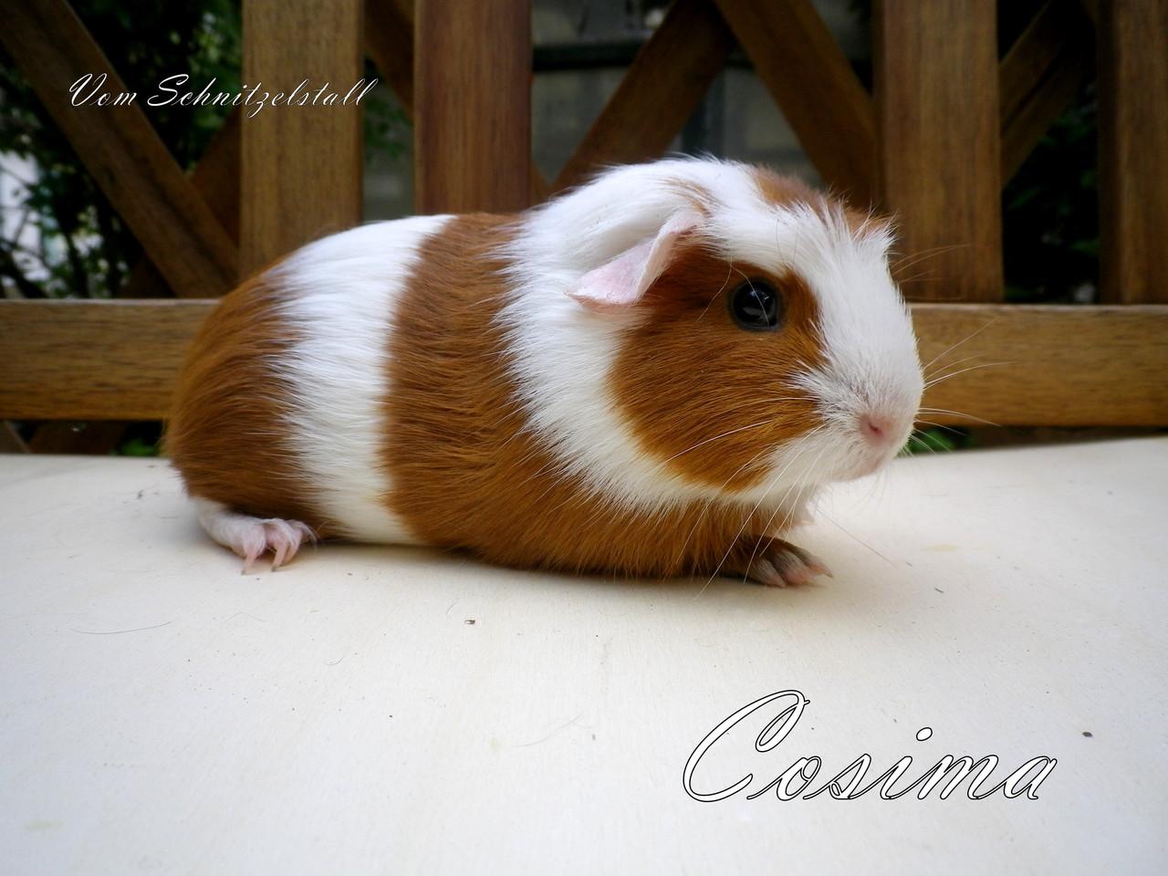 Cosima vom Schnitzelstall