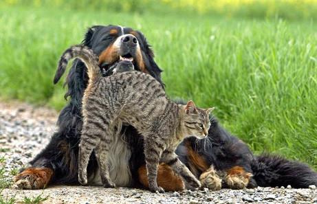 Hund & Katz' II