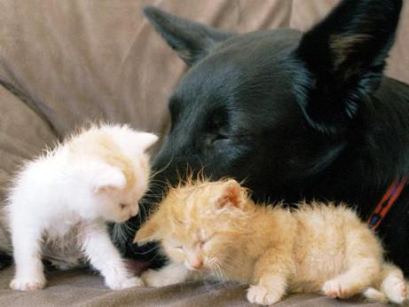 Hund & Katz' I