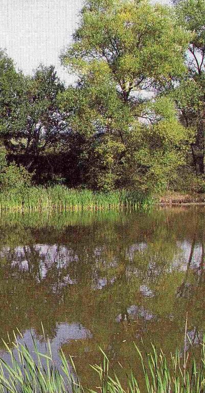Naturnahes Fließ- und Stillgewässer mit gewachsenem Gürtel aus Röhricht und Uferhölzern