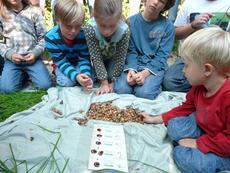 Die Nüsse wurden gesammelt und am Schluss die Fraßspuren identifiziert
