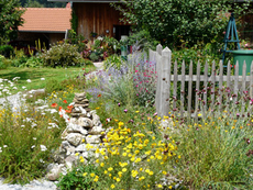 Bunte Gärten ohne Torf - denn Torf gehört ins Moor!