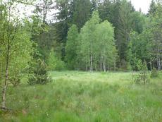 Blick in den Moorteil der Reischau mit blühendem Wollgras (Bild: Wagenstaller)