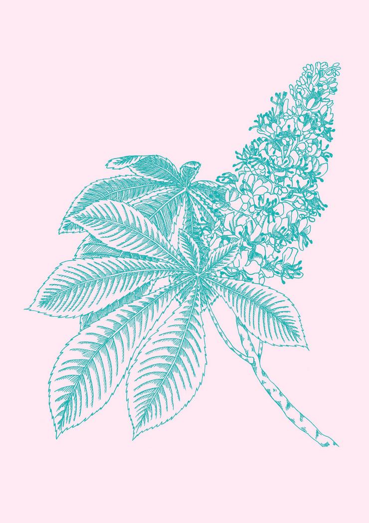 design illustration melanie suter floral botanisch pflanzen kastanie natur kosmetik handgezeichnet analog