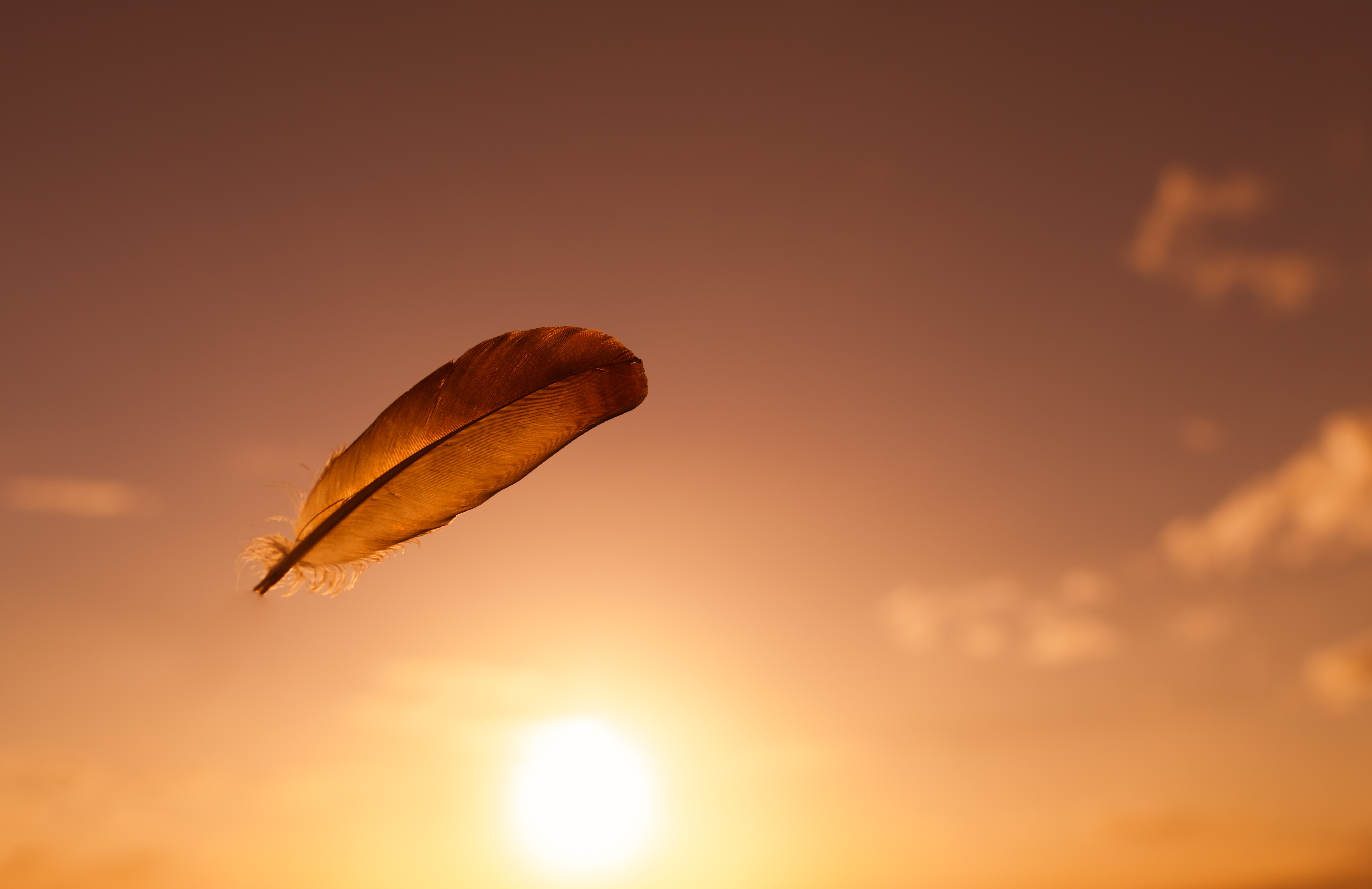 Blütenbild, Entspannung und Wellness in der Massagepraxis Stemmer in Schöntal-Berlichingen, Raum Jagsthausen