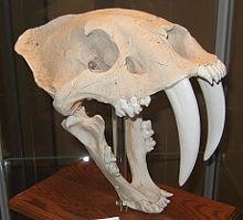 スミロドンの写真 wikipedia