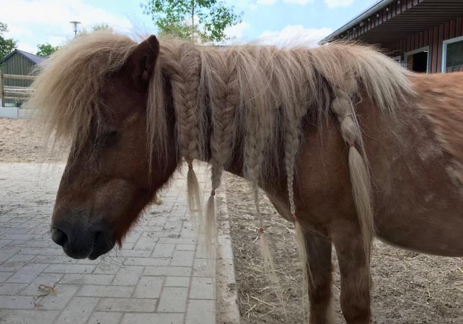 Unser gerettetes Pony hat die Haare schön - Friseur Bielefeld