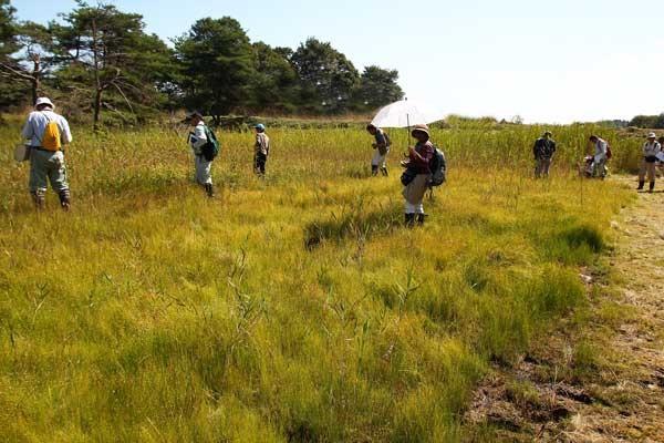 思わぬ場所にこのような湿原がありました。 足元にはイトイヌノヒゲなどがビッシリ!