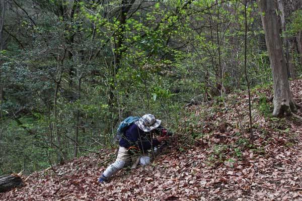 小さな里山でしたが、意外と植生が豊かでした。 急傾斜の場所も多い