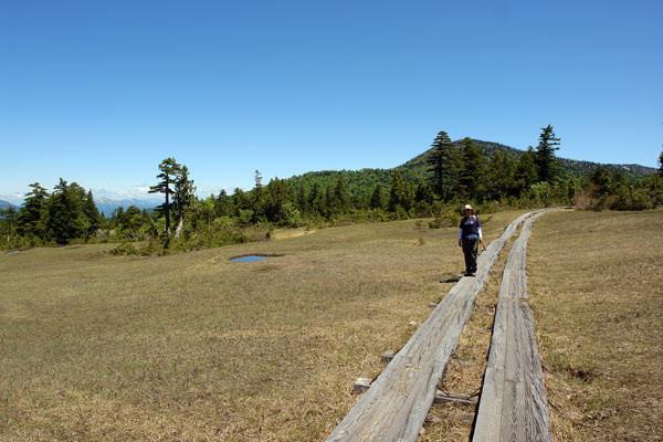 上田代あたり。 湿原と森林が交互に現れます。 木陰は涼しいが日向は暑い!