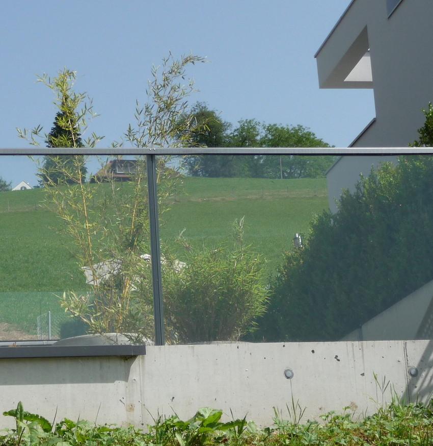 Vögel wollen die Pflanzen hinter dem Glas anfliegen!