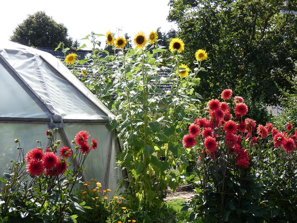 jardin mandala-la claie des landes