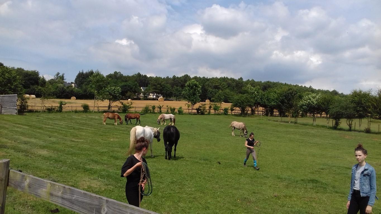 Rencontre du cheval en troupeau