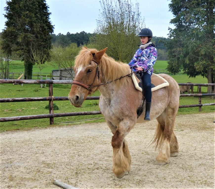 chevaux du vent - la calie des landes