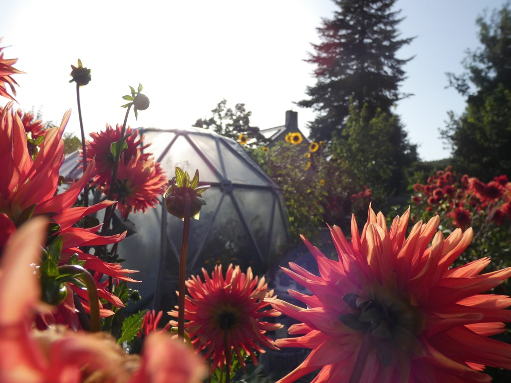 jardin manadala- la calie des landes