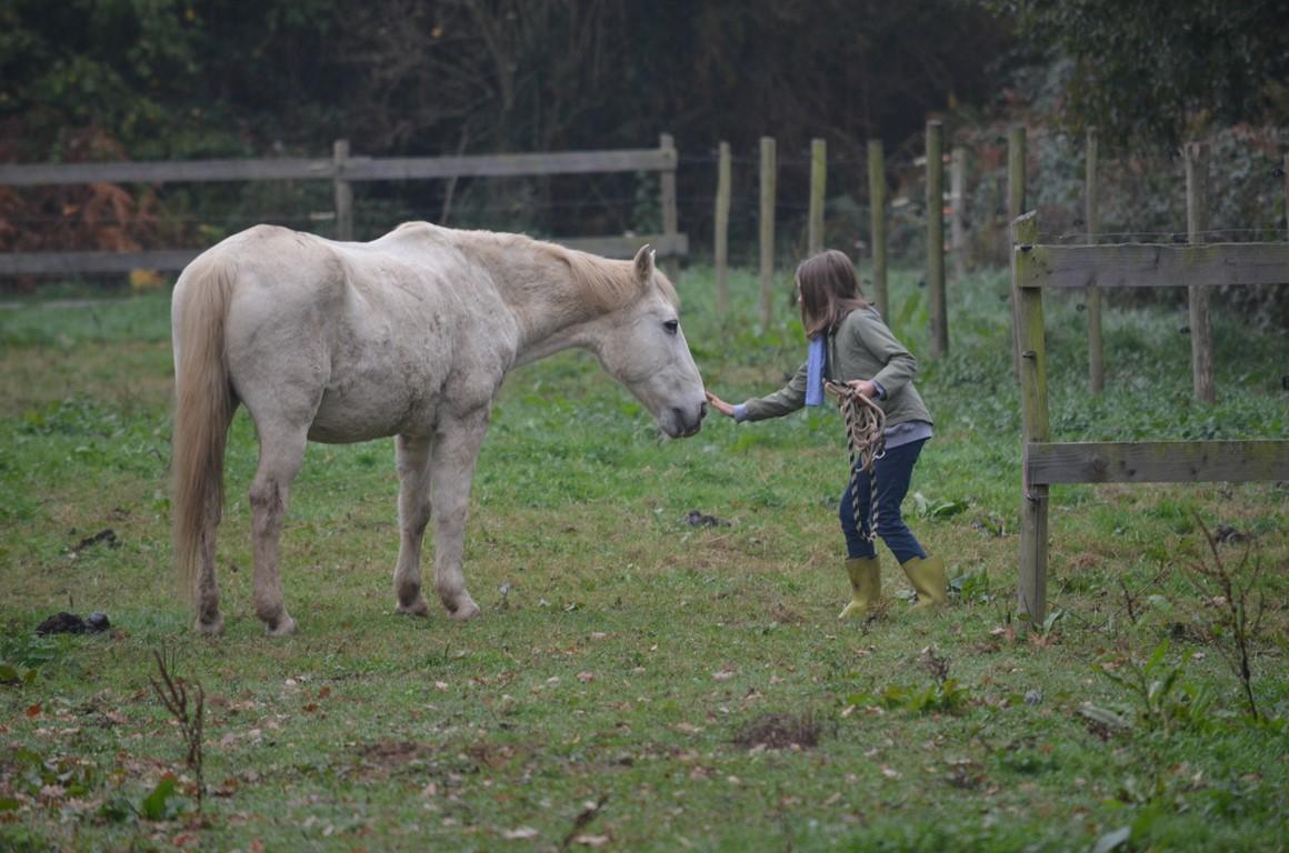 les chevaux du vent- laclaiedeslandes