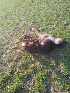 Yoga für Hunde :-)