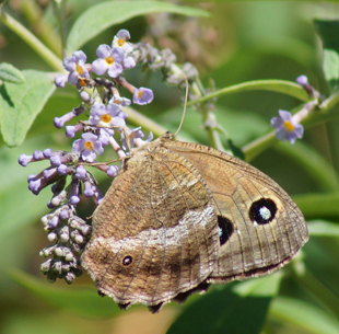 Les papillons ont changés de place sur le site...