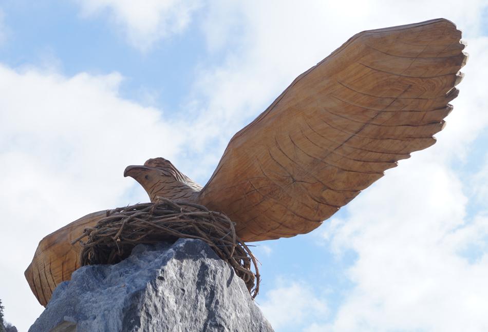 Une bien petite aire pour un si grand oiseau...