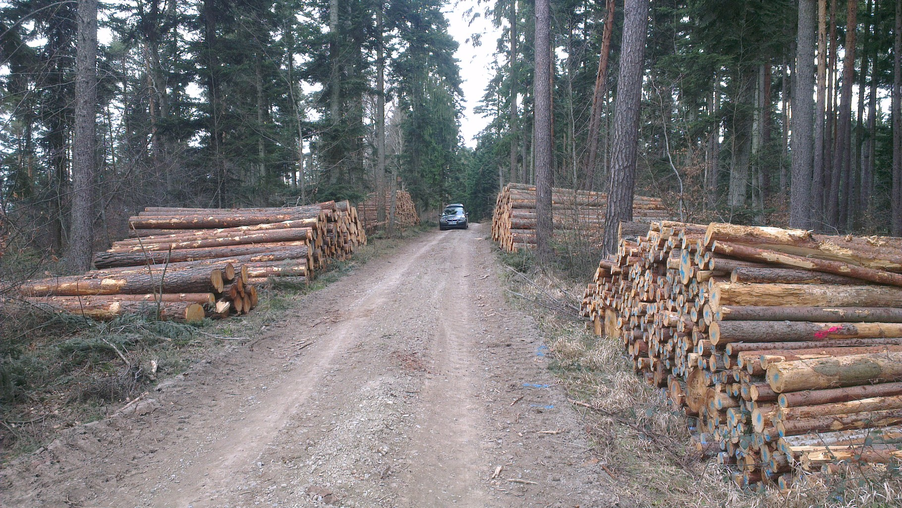 Holz abholbereit am Fahrweg