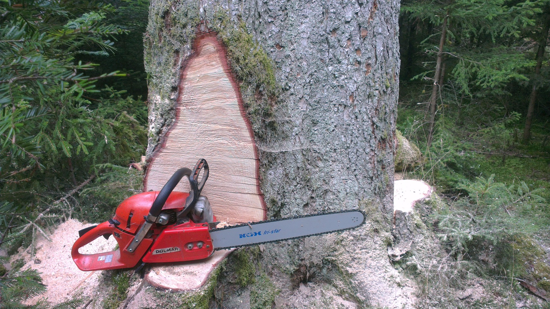 Den Baum vorbereiten
