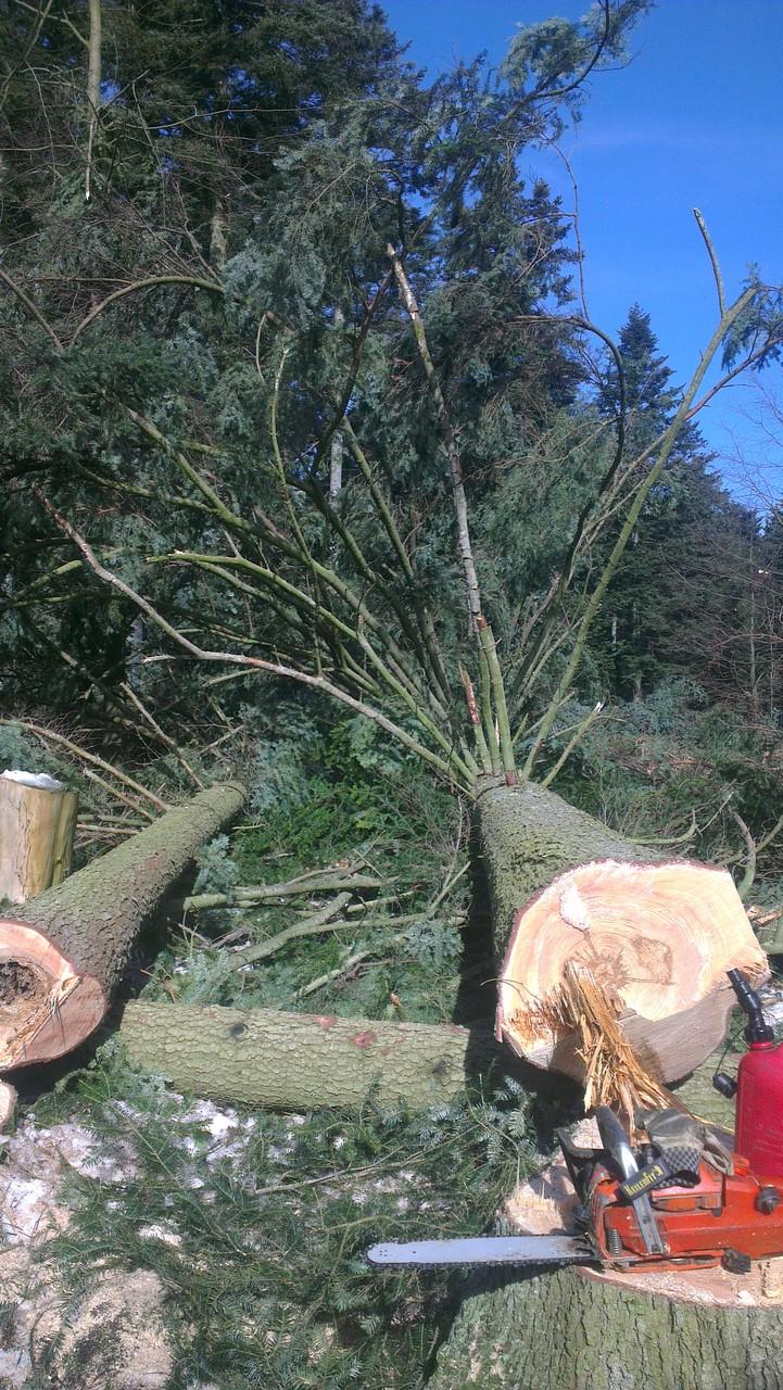 Baum entasten