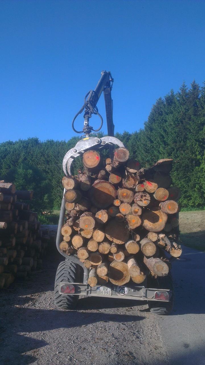 Holz am Fahrweg poltern