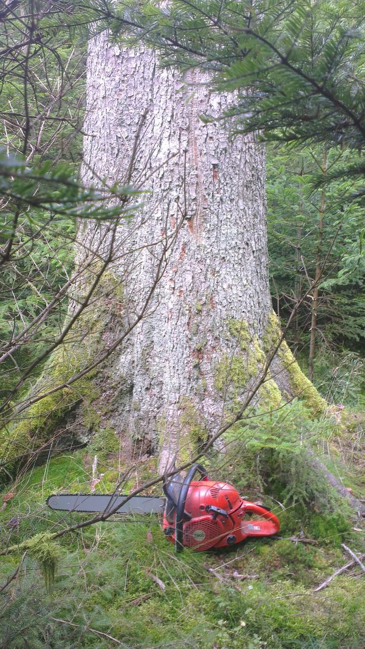 Baum auswählen