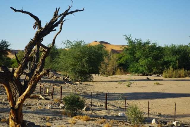 Désert du Namib à Gobabeb