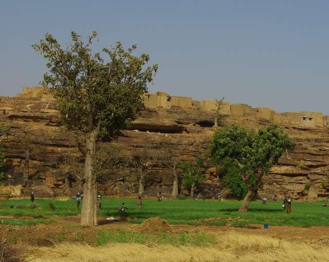 Femmes arrosant les champs d'oignons (à la main, eau puisée au plus proche barrage)