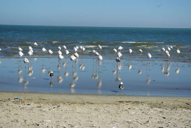 Flamants roses - Wolvis Bay