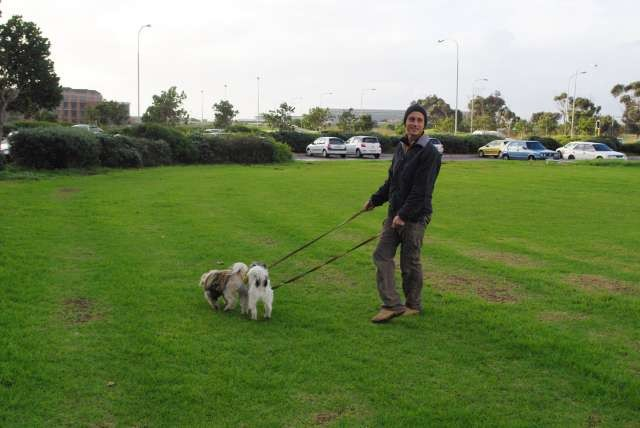 Balade avec les chiens de Liz