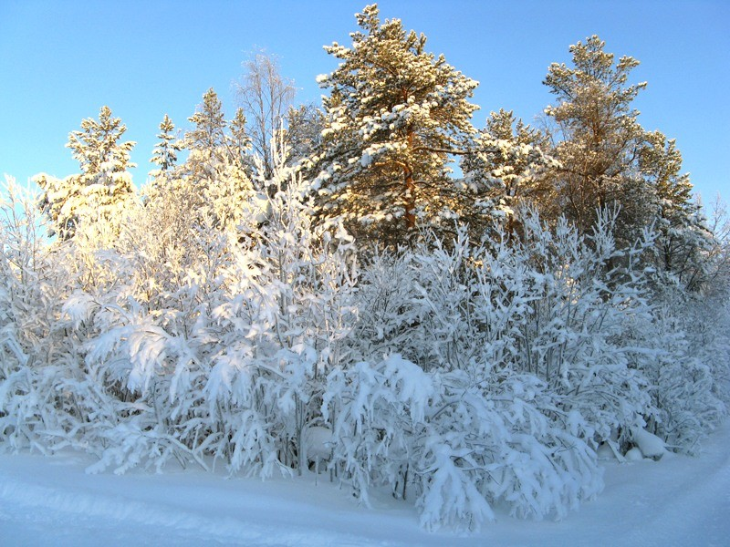 Мороз и солнце