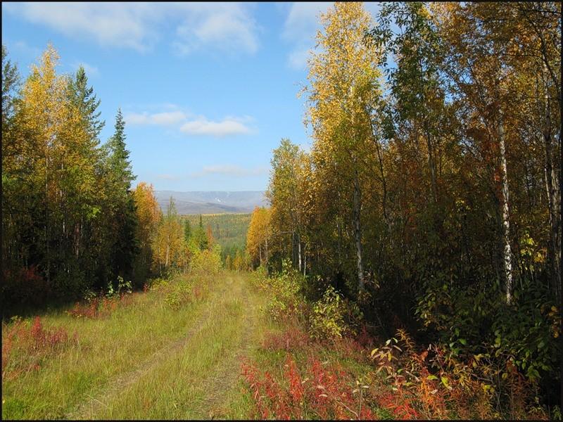 Лесная дорога в Хибины