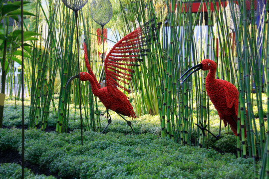 La Danse amoureuse de Ibis Rouges